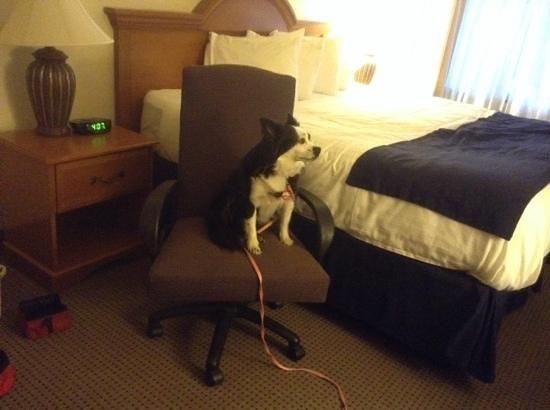 Best Western War Bonnet Inn: My Posy loves the room!