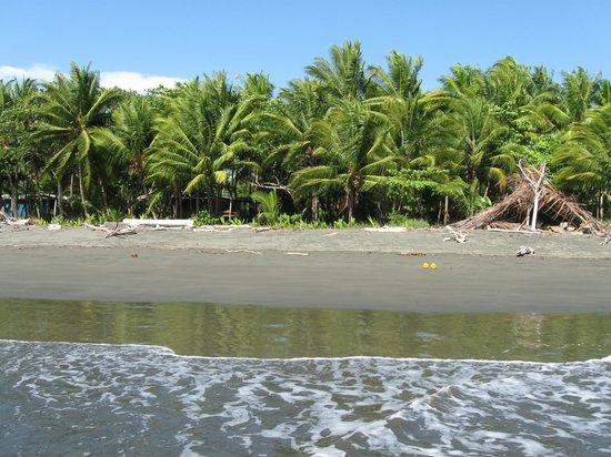 Cabinas Los Cocos : beach area