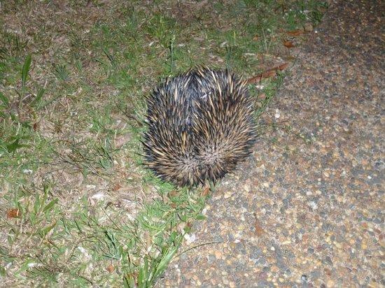 TeePee Retreat: Late night visitor