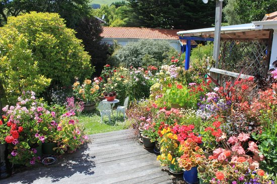 Arts Content Bed and Breakfast : Rose and pot garden on back deck