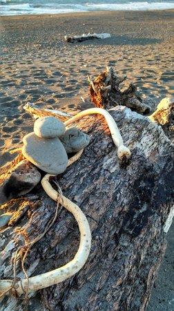 King Range National Conservation Area: Kelp and Driftwood Scupltures