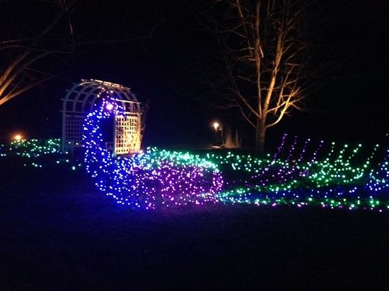 Peacock of lights at Ginter Gardens light festival. - Picture of ...