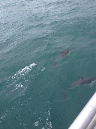 Abel Tasman Sea Shuttle Ltd: Dophins raced us along the way