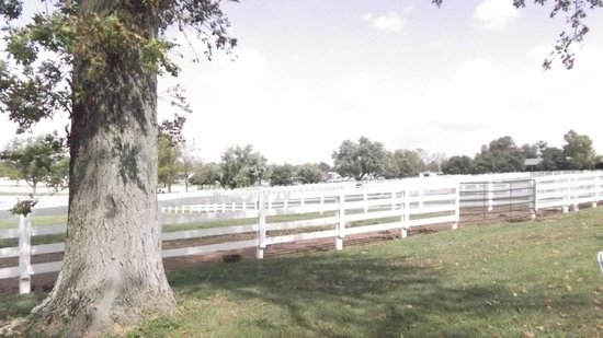 A veiw of the Grounds, Kentucky Horse Park