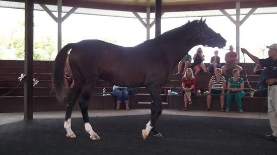 Kentucky Horse Park : Cigar, Winningest RAce Horse