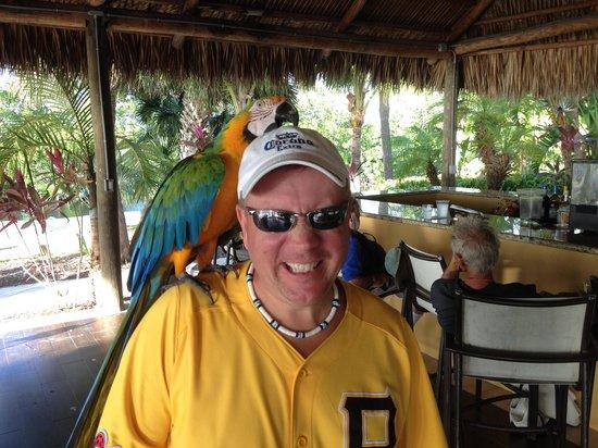 Hampton Inn Key Largo: Mango !