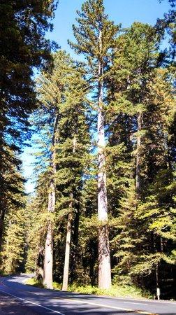 Redwood National Park: Huge Scale