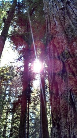 Redwood National Park: Redwoods That Filter the Sun