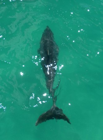 Fullers GreatSights Bay of Islands Day Tours : Dolphin fun