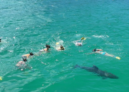 Fullers GreatSights Bay of Islands Day Tours : Swimming with the Dolphin