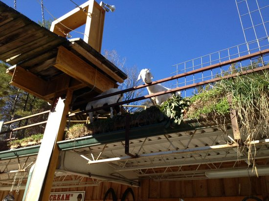 Goats on the Roof: A Goat on the Roof