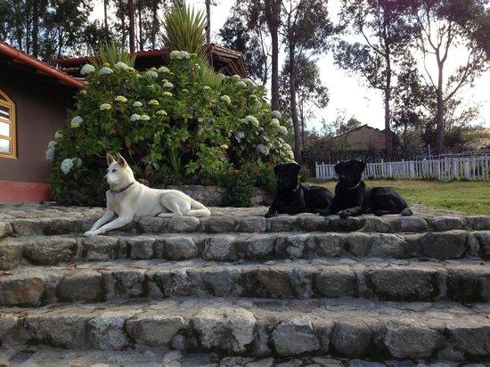 The Lazy Dog Inn: The famous lazy dogs