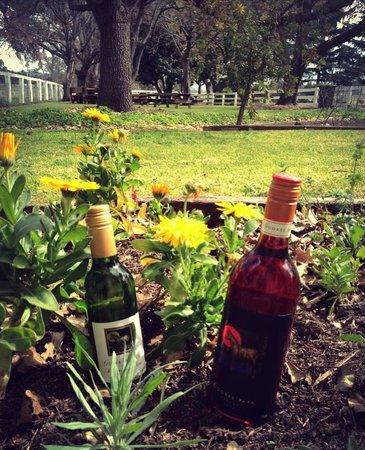 Gooree Park: Spring new wine releases!