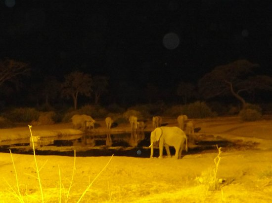 Elephant Valley Lodge: Watering hole