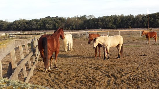 Pacific Dunes Ranch RV Resort: Horses chilling out