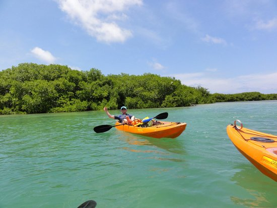 Glass Bottom Boat and Kayak Snorkel Tours: Bij het mangrove bos