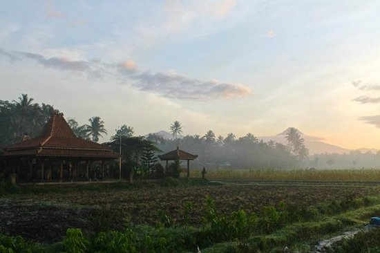 Rumah Dharma: The tranquil setting of the villas