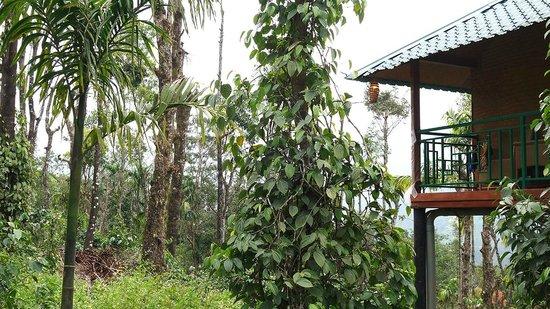 Kaivalyam Retreat: Treehouse