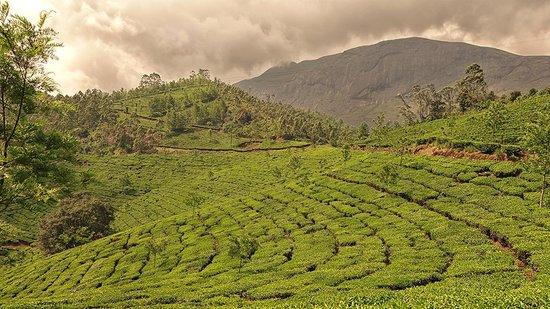Kaivalyam Retreat: Munnar Tea Plantations