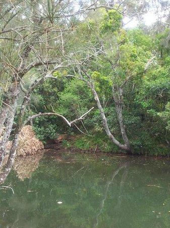 Seven Mile Beach Holiday Park : River from Verandah