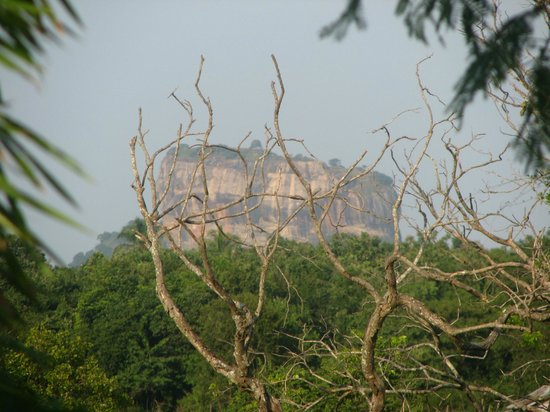 Jetwing Vil Uyana: le piton rocheux de Sigiriya