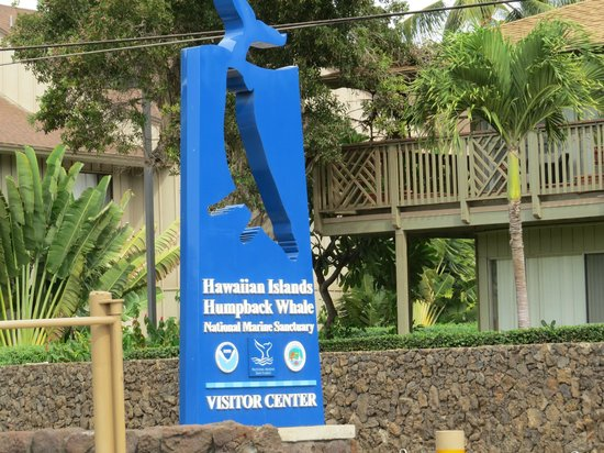 Hawaiian Islands Humpback Whale Sanctuary Visitor Center: Neat sign from the road