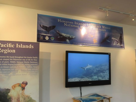 Hawaiian Islands Humpback Whale Sanctuary Visitor Center: Pacific Islands Region with the Fellowship of the Whales DVD playing on the screen