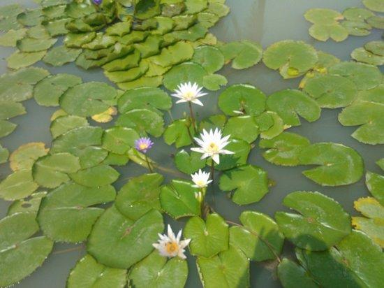 The Sarojin: Bungalow Pool