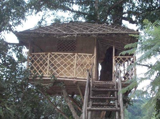 Bamboo Grove: Tree House