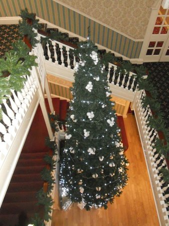 Balmer Lawn: Christmas tree December 2013