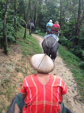 สยาม ซาฟารี: 45m elephant trek
