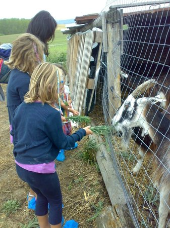 Agri Service: Dalle capre ai caprini
