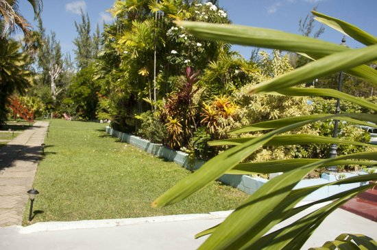 The Palm Garden Hotel: The gardens behind the pool