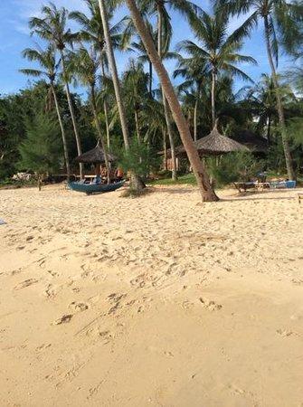 Coco Palm Beach Resort & Spa: Private Beach
