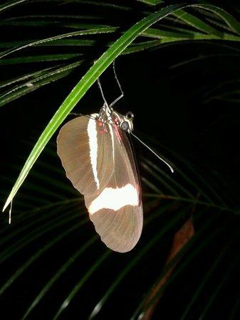 Cabinas Iguana: Una mariposa cerca de la picina