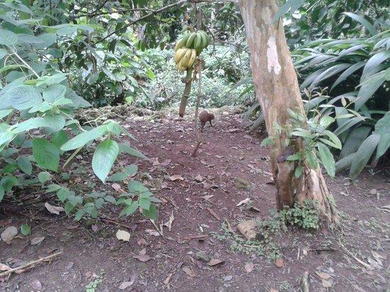 Cabinas Iguana: Una guatusa frente a nuestro bungalo