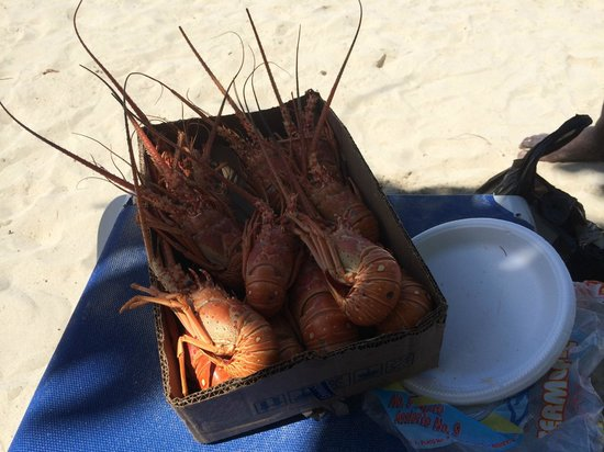 Rondel Village : Lobster on the beach