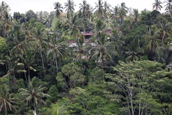 Villa Sarna Ubud : Our serene view from the room (Krishna)