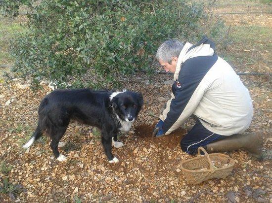 Truffiere des Merigots: Eric le roi de la truffe et son guide, prune
