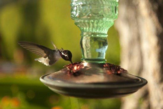 Desert Riviera Hotel: Hummingbird