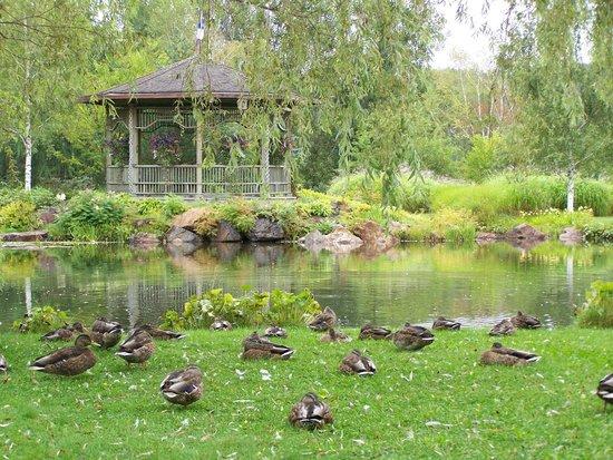 Une des mosa cultures du jardin botanique photo de new for Auberge du jardin edmundston