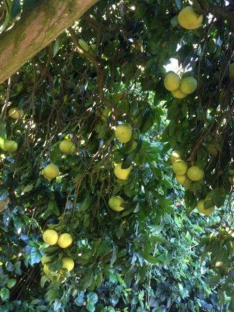 Villa Mandarine : je jardin