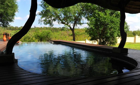 Muweti Bush Lodge: Nice clean and big pool.