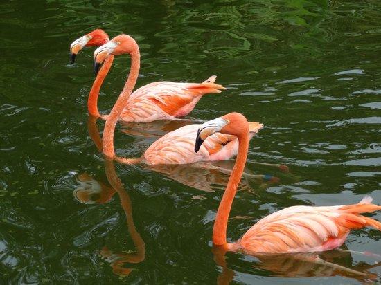 Jungle Island: Flamingo Lake