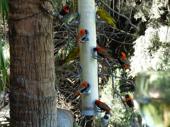 Thabile Lodge: The bird feeder is always busy