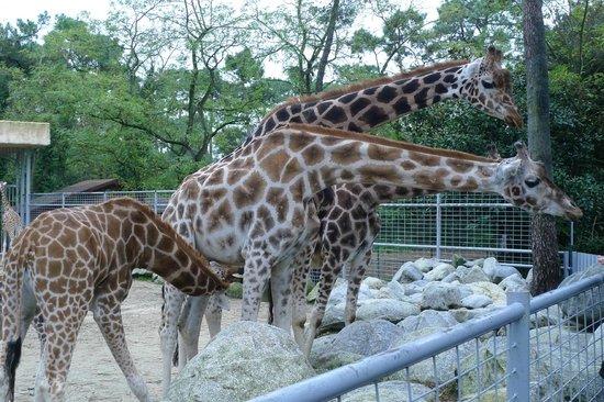 Zoo de la Palmyre : Il a faim le petit.