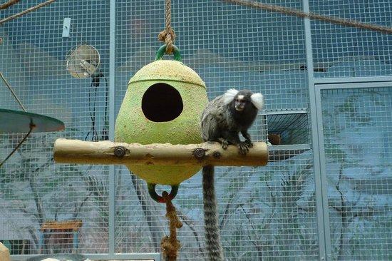 Zoo de la Palmyre : Je surveille la Casbah...