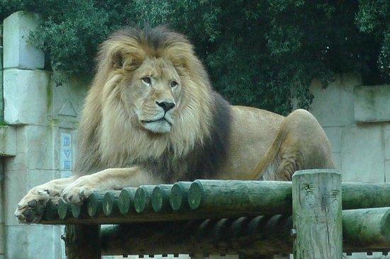 La Palmyre Zoo : Quoi tu veux ma photo...