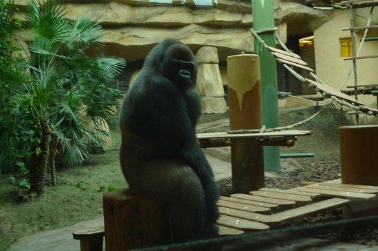 La Palmyre Zoo : Heureusement qu'il y a une séparation...