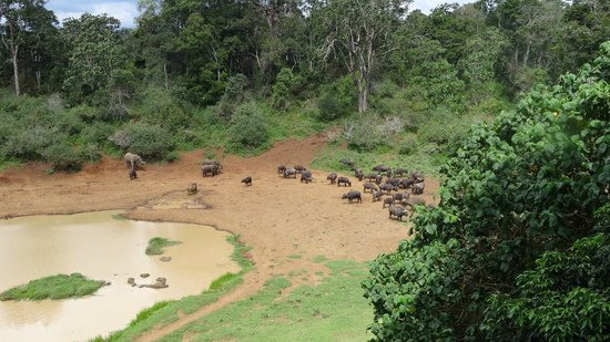 Serena Mountain Lodge: The watering hole as viewed from the public balcony.